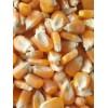 玉米收购企业 常年求购玉米高粱大豆棉粕次粉荞麦油糠碎米