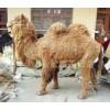 骆驼仿真标本大型动物场馆用仿真动物仿真骆驼模型