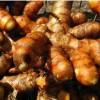 姜黄出货了,基地直发,量大从优,品质优良,数量不多,售完截止