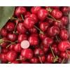 济宁大量出售各种品种大樱桃,价格便宜,质量好