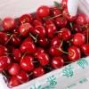 济宁大樱桃上市,出售红灯 早大果新鲜水果等品种