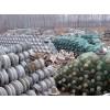 大量回收各种电力绝缘子电力金具电力物资