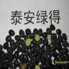 高产优质黑大豆种子 青仁乌豆种子 投入少效益高管理简便