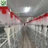 猪场自动喂料设备 料线外输送 自动化养猪设备厂家生产