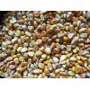 收购大量玉米、糯米