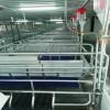 养猪设备喂料 喂猪神器猪场自动料线 母猪料线安装